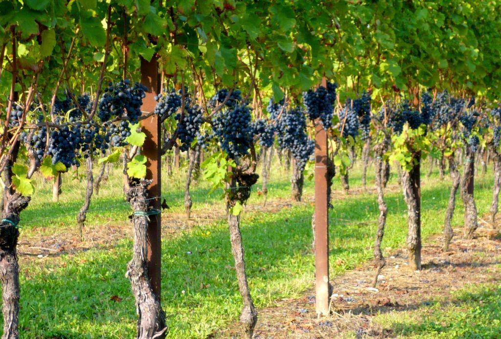 Promozione vini, ecco il bando