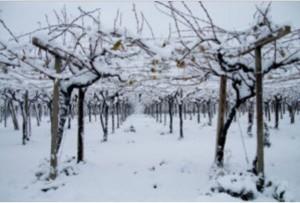 Neve, al via iter per il riconoscimento stato di calamita'